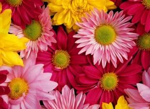 Cveće koje pročišćava vazduh u prostoriji
