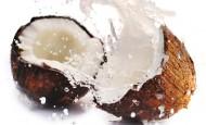 """Tečnost iz kokosa – """"eliksir života"""""""