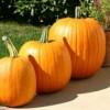 "Četiri jesenje namirnice koje ""tope"" kilograme"
