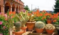 Kaktusi – bodljikavo lepi