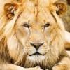 Deset najsmrtonosnijih životinja
