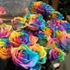 Ruže u bojama duge