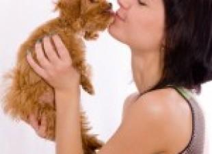 Kućni ljubimac – vaš najbolji prijatelj?