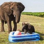 sloncic se kupa